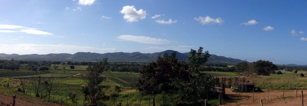 Piña Farming